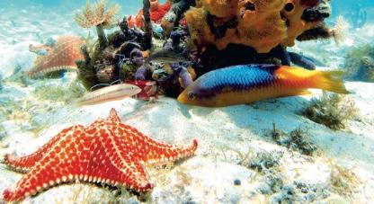 Dominikana Wakacje Coral Travel Punta Cana