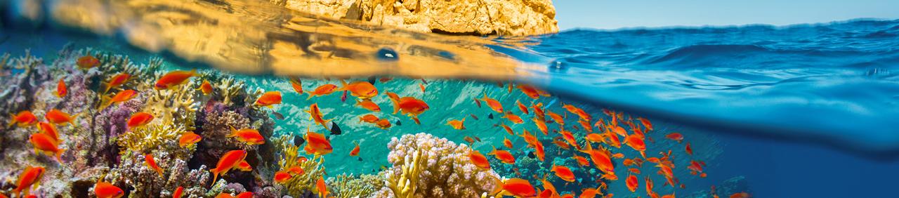 Wakacje Marsa Alam Coral Travel