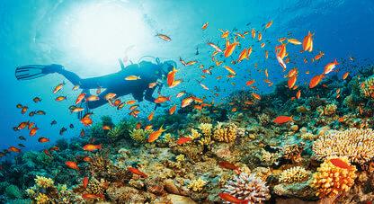 Wakacje Dahab Coral Travel